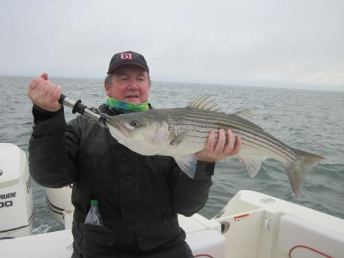 And they keep on coming for Jeremy.... Another good Striper., USA Trips